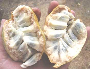Medium sized fruits