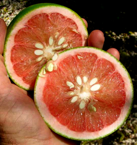 Juice Vesicles Of Grapefruit