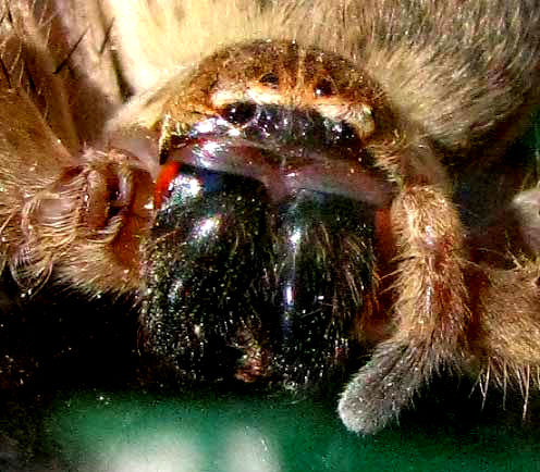 how to get rid of florida crab spider