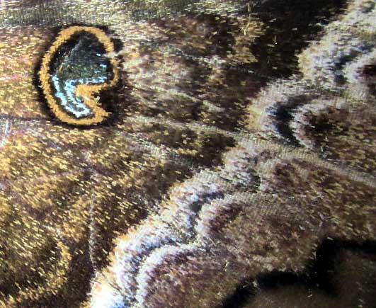 Black Witch Moth, ASCALAPHA ODORATA, close-up of wing design
