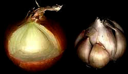 onion bulb cross section, with garlic bulb showing cloves
