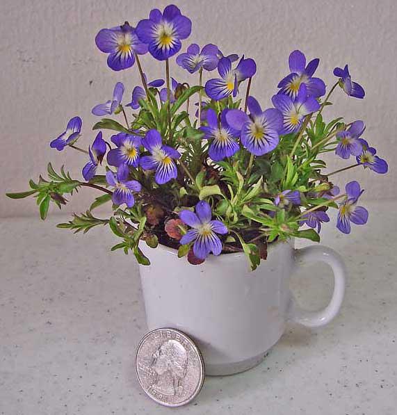 JoAnn Wasson's Wildflower Bouquets