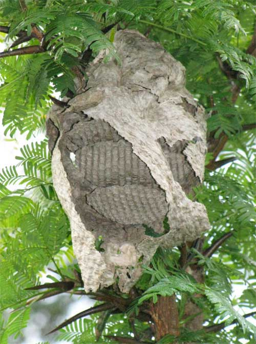 paper wasp nest inside